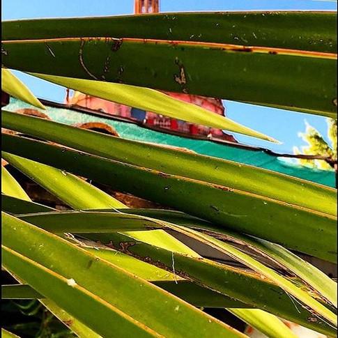 Claudia Shapiro, Portafolio Color, Naturaleza