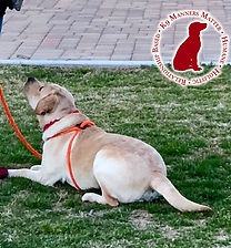 K9 Manners Matter in SCV | About Us