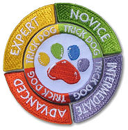 K9 Manners Matter in SCV | Certified Trick Dog Instructor