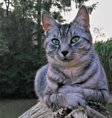 Weight Loss in Older Cats