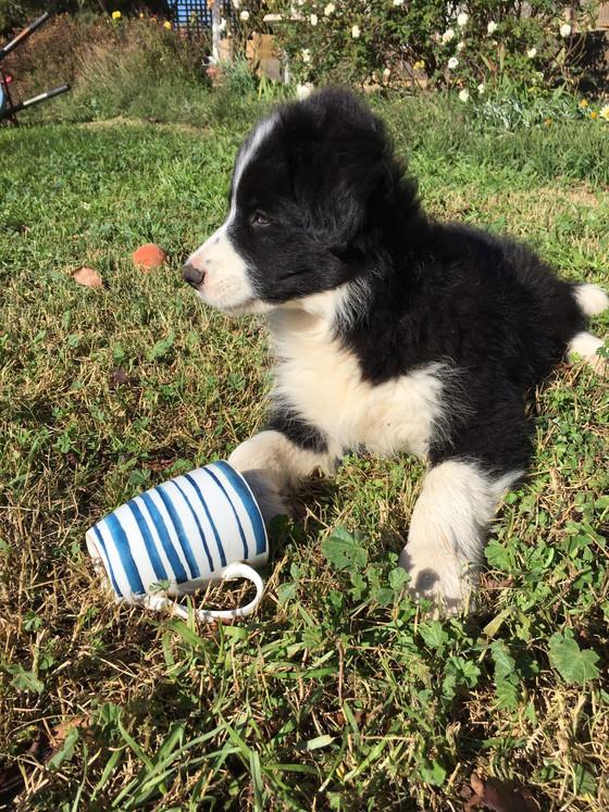 Our newest vineyard helper!