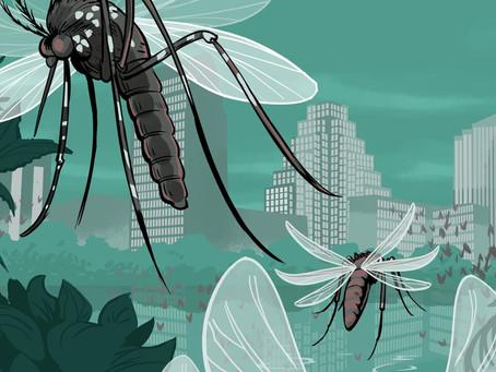 Make your yard a mosquito free yard!!