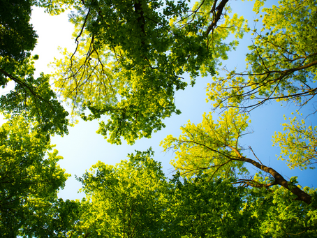 Have your tree inspected before it does damage to                      your house.