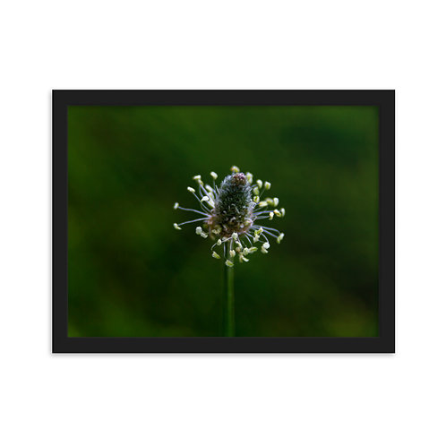 signs of Spring Framed matte paper poster