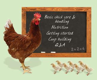 Chicks 101 Online