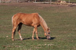 Natural equine parasite control