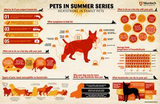 Prevent Heat Stroke in Pets