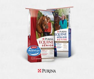 Equine Senior Updated