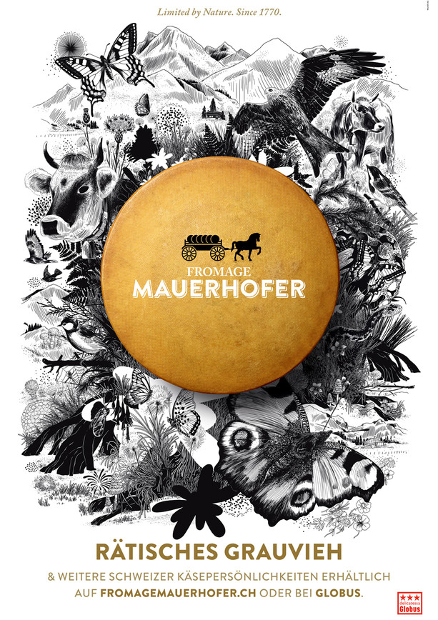 FromageMauerhofer-Grauvieh.jpg
