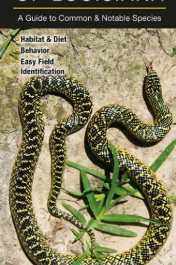 Snakes of Louisiana: A Guide to Common & Notable Species