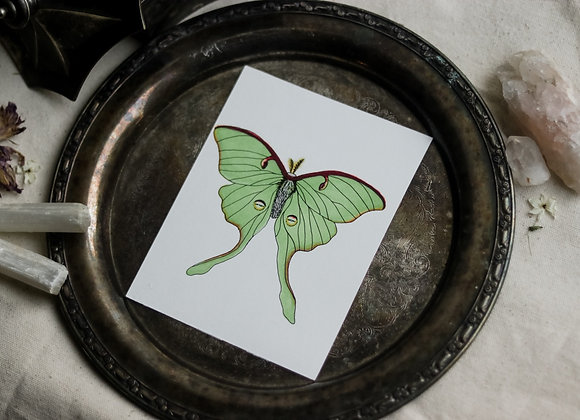 "Luna Moth 4.5""x6"" Original Illustration"