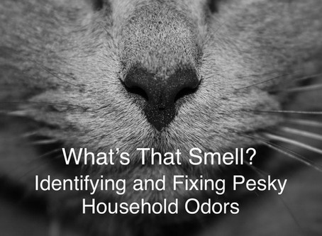 What's That Smell? Identifying and Fixing Pesky Household Odors