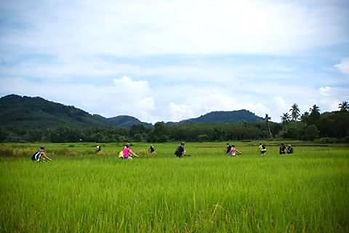 ballade à velo sur l'île de Koh yao noi dans le sud de la Thaïlande