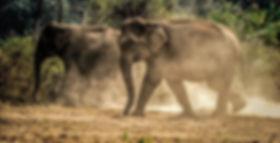 refuge elephant thailande