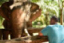 bain avec elephant thailande