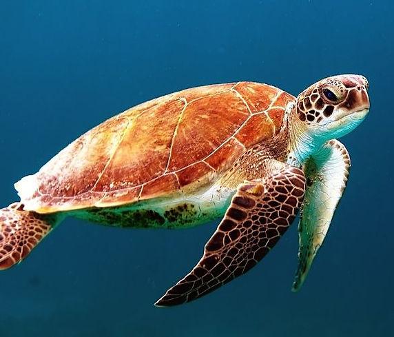 spots de plongée avec tortues
