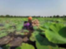 ferme lotus bangkok.jpg