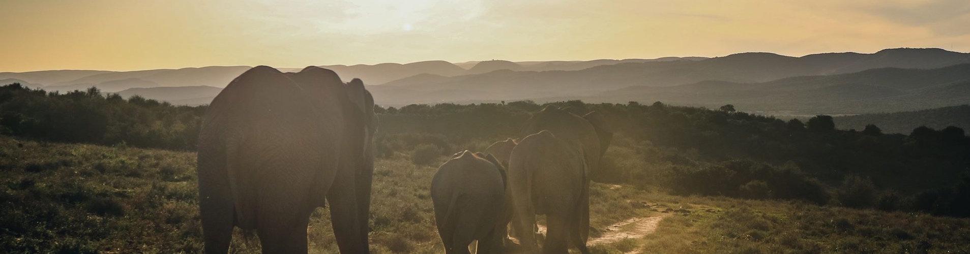 elephant thailande voyage authentique