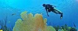 Plongée à Phuket