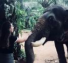éléphant thailande  khao sok