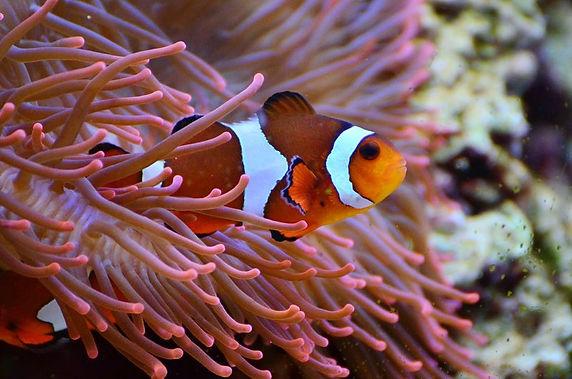 plongée sous-marine avec poissons clown