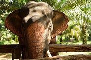 elephant centre ethique thailande