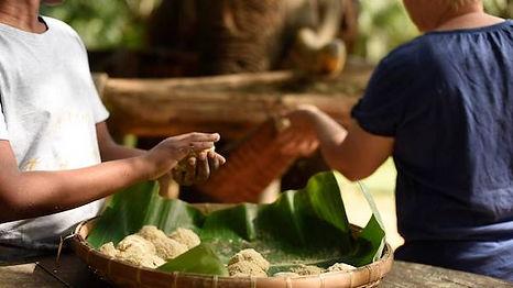 elephant khao sok