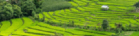excursion à chiang mai rizieres