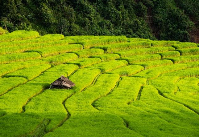 riziere en terrasse nord thailande