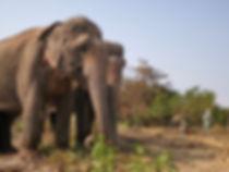 sanctuaire elephant siem reap.jpeg