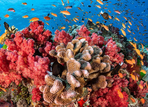 The Science Behind: Corals (part 1)