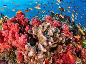 The Science Behind Corals (part 2)