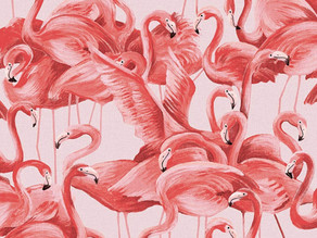 Why Flamingo's Are Pink