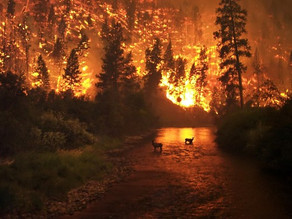 How Climate Change Affects Wildfires