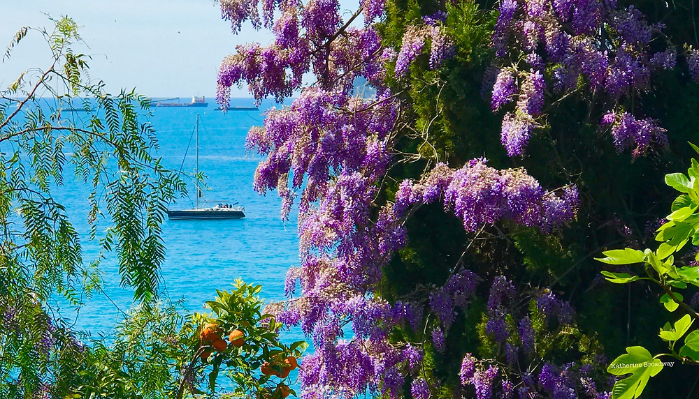Image of lilac blossoms with ocean and boats in the background. Raleigh Psychotherapy. counseling, Freud, Katherine Broadway