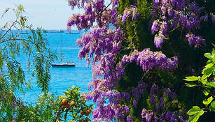 Image of lilac tree against an ocean background