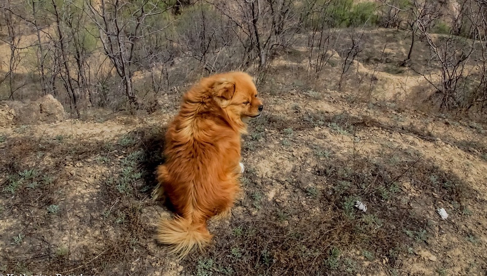 Image of dog on a hill looking down on winter trees. Katherine Broadway, M.Div., LPC, Counseling, Raleigh Psychotherapy