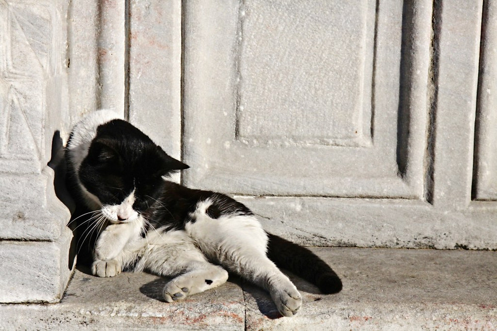 Image of cat sleeping in corner of stone doorway. Counseling raleigh, therapy, © Katherine Broadway