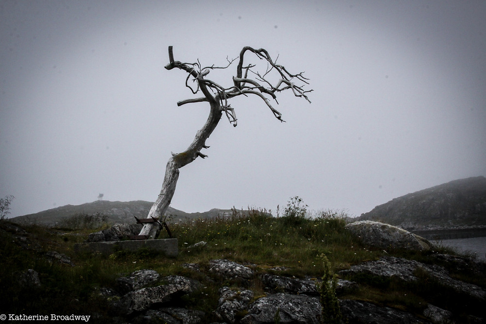 Image of lone leafless tree on a barren hill.