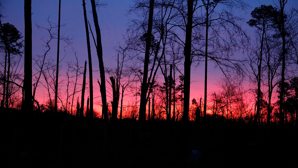 Image of winter forest in pink sunset. Raleigh Psychotherapy, Counseling, Katherine Broadway, psychotherapy