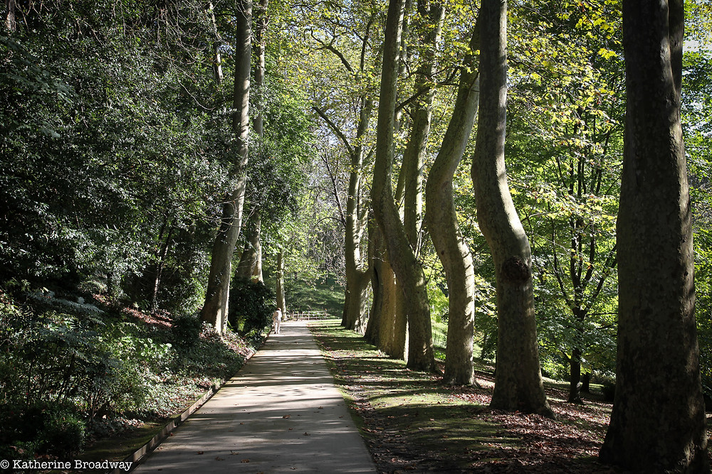Image of walkway through a wooded park.