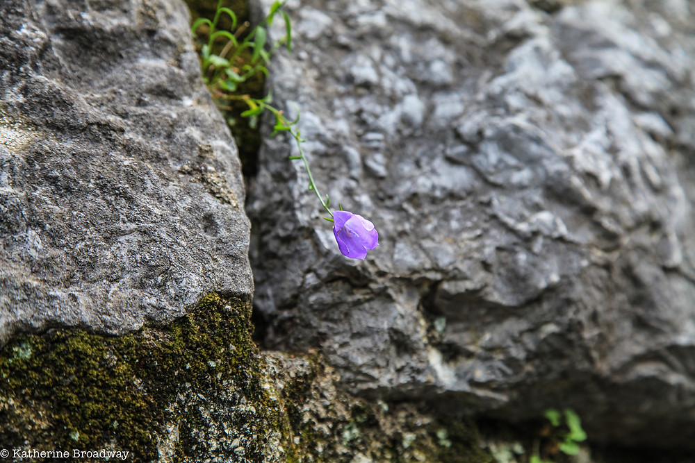 Image of single lavender flower growing through cracks in stones. RALEIGH PSYCHOTHERAPY, COUNSELING, KATHERINE BROADWAY, LOVE