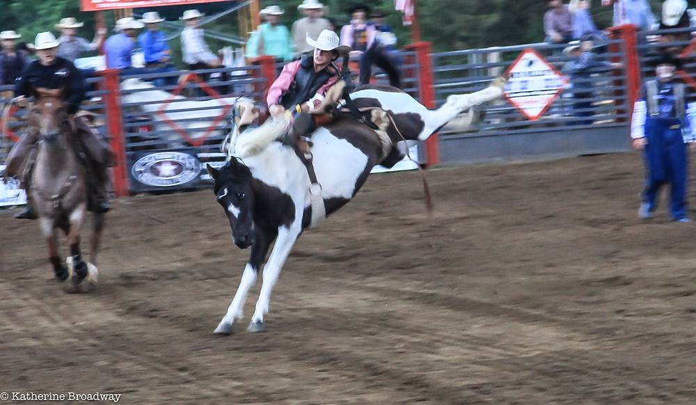 Image of bucking bronco at rodeo. Raleigh Psychotherapy, Katherine Broadway, counseling