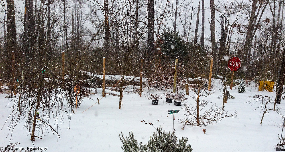 Image of a snowy garden. Raleigh Psychotherapy, counseling, Near Enemies, Katherine Broadway