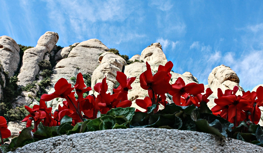 Image of red flowering plants against white rock formations.Raleigh Psychotherapy, counseling, Harsh Inner Critic, Katherine Broadway