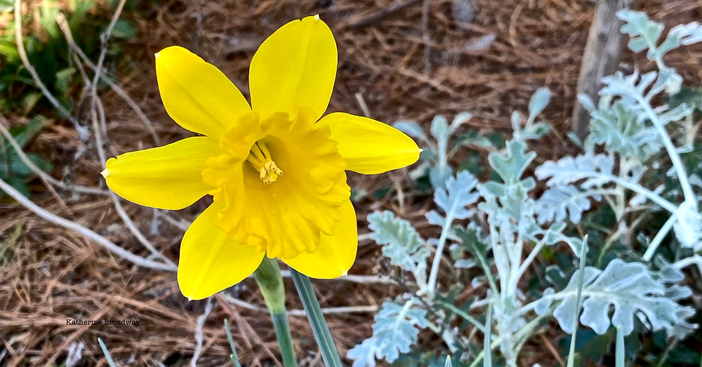 Picture of a flower, trust, Raleigh Psychotherapy, counseling, Katherine Broadway