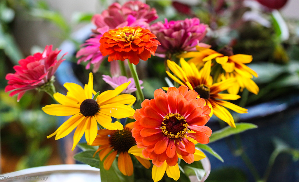 Image of multicolored flowers in a bouquet. Raleigh Psychotherapy, counseling, Apology, Katherine Broadway
