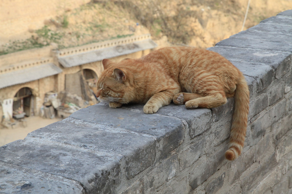 Image of orange cat on stone wall high above village. Katherine Broadway, M.Div., LPC, Raleigh Psychotherapy, counseling