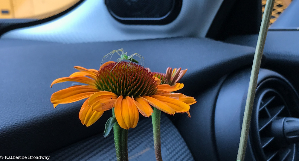 Image of green insect on orange flower inside a car.