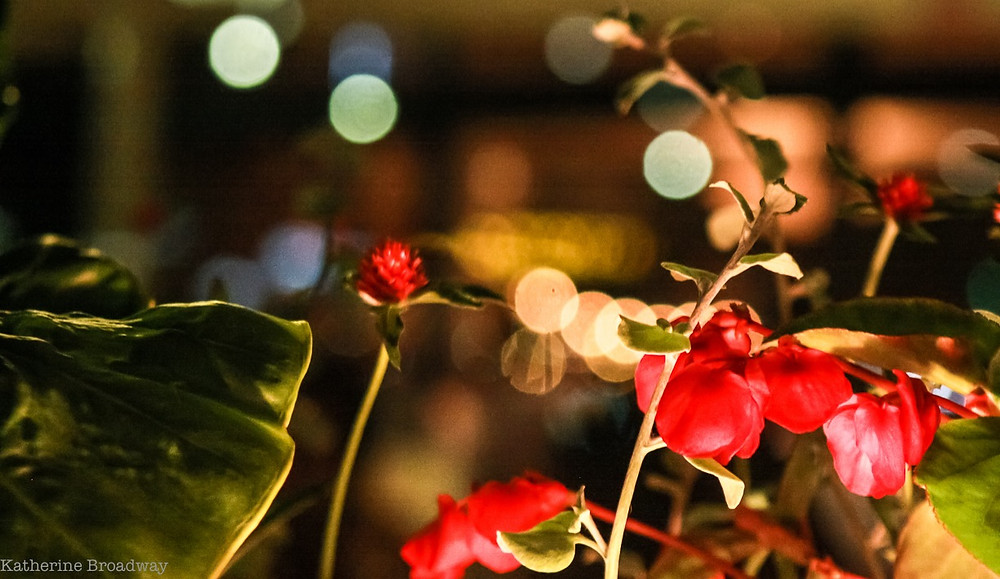 picture of flowers and light, disappointment, Katherine Broadway, counseling, Raleigh Psychotherapy